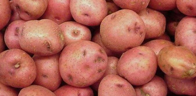 Картофель для картофельного пюре